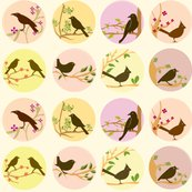 Rcute_birds_shop_thumb