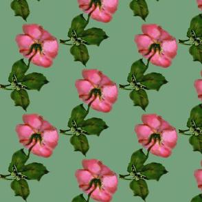 Wild Roses God is Love