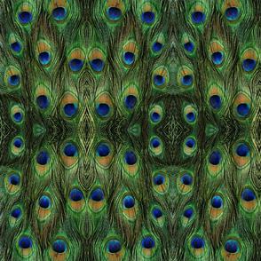 Peacock Insanity