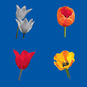 tulips4square1200spoon