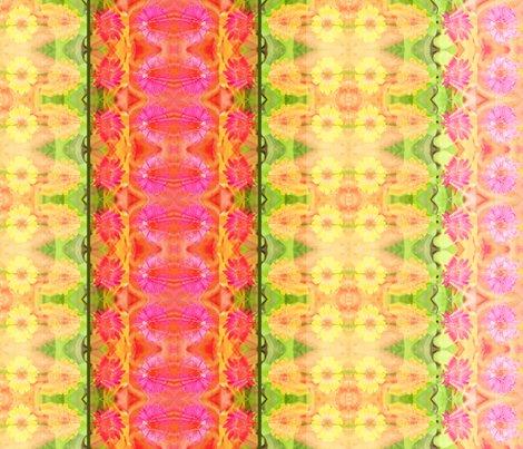 Rd_zinnia_border_6300x300_picnik_collage_shop_preview