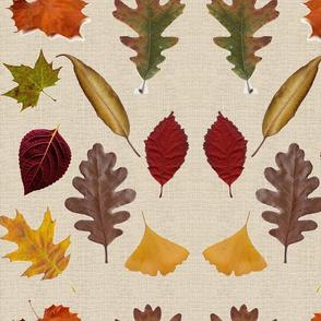 Fall Leaves-275