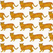 Mr. Tom Cat