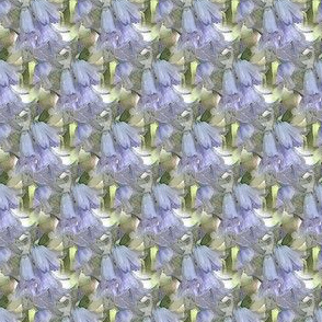 Blue bell (small)