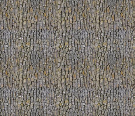 Garry Oak bark fabric by koalalady on Spoonflower - custom fabric