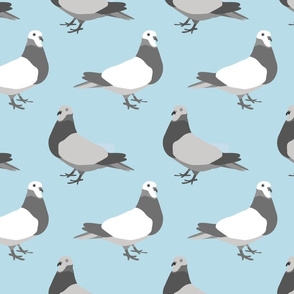Pigeon Parade, teal blue