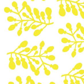 Yellow Branch
