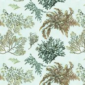 Rseaweedwallpaper_shop_thumb