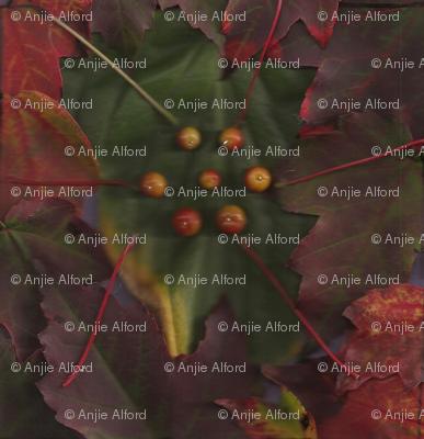 Autumn_Flowering_001