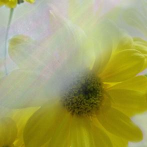 Sunbeams on Flowers