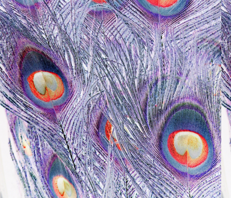 Peacock Feathers fabric by daydreamer5 on Spoonflower - custom fabric