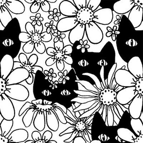 Black Cats in Daisies