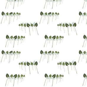 line up -white