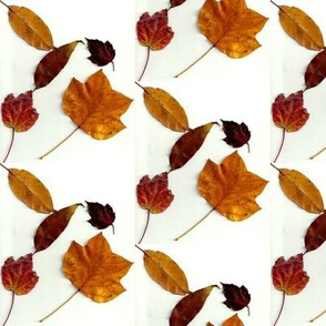 leaf_combo