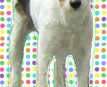 Doggy_thumb