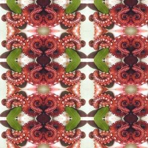 Octopod 2