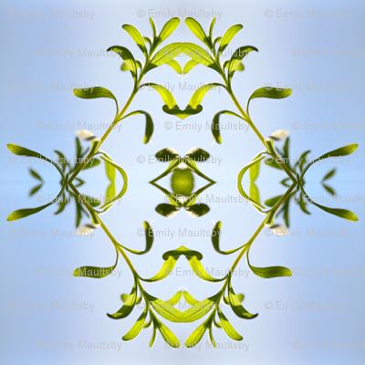delicate plant