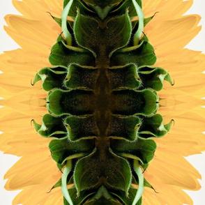 sunflower stripes