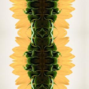 side_view_of_sunflower_by_emilyrosecaspe-d2zsjbh_copy2
