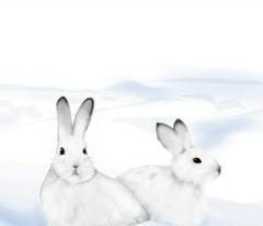 Little Snow Bunnies