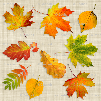 scanned_leaves
