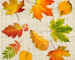 Rscanned_leaves_thumb