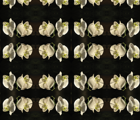 IMG_2972 -- Nob Hill Orchids fabric by mmc2010 on Spoonflower - custom fabric