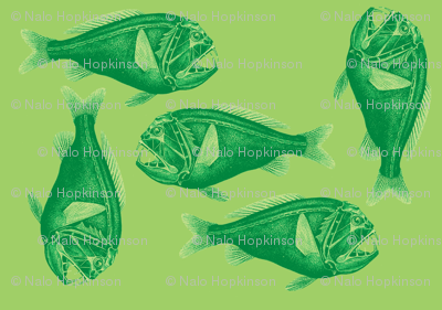 Green cololepsis