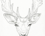 Rfallow_deer_thumb