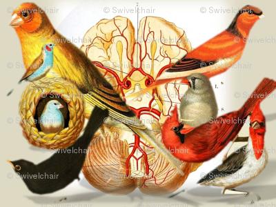 Vintage Printable - Birds and Brains