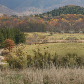 Autumn in cow country