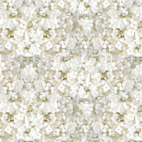 Hydrangeas (creamy white)
