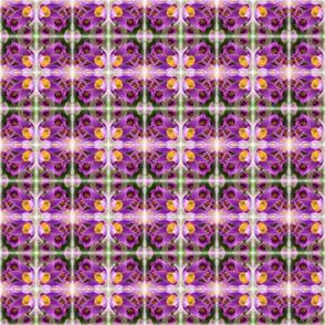PurplePasquePlaid