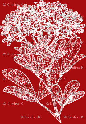 Winter Floral - Choisya