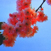 Pink Spring Time