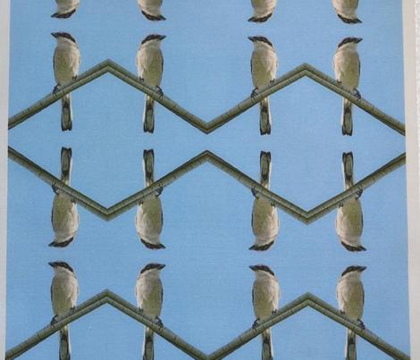 Loggerhead Shrike_4015