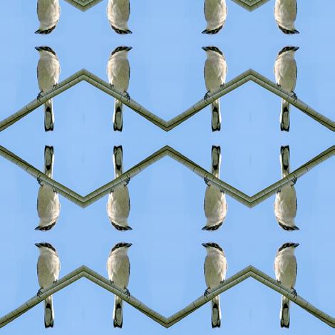 Loggerhead Shrike_4015 fabric by eclectic_house on Spoonflower - custom fabric