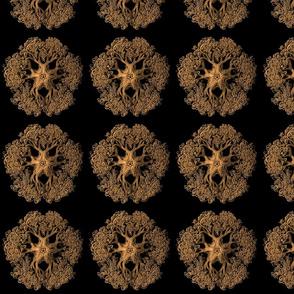 Haeckel Ophiodea Gorgonocephalid