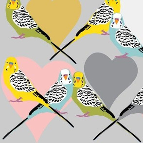 I Heart Budgies