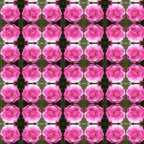 Sweetheart Rose small repeat
