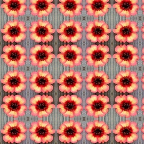 Cinquefoil Flower large repeat