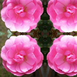 Sweetheart Rose large repeat