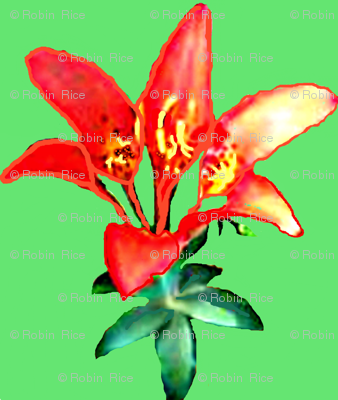 Sea Cairn Lily II