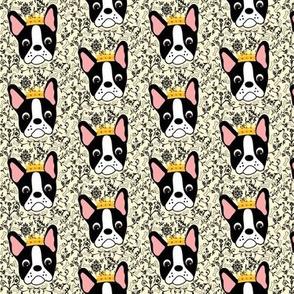 Little Queen Daisy