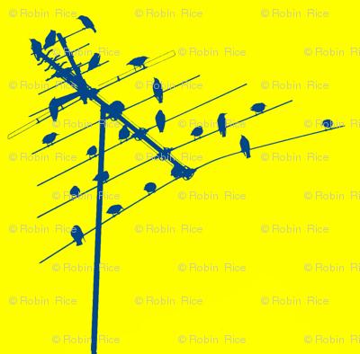 Bird Central
