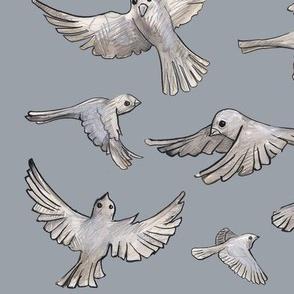 Gray Sparrows