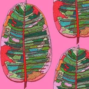 rubber leaf in pink