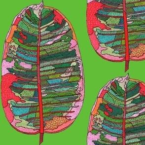 rubber leaf in green