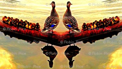 Ducklings at Dawn