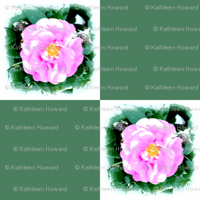 wild_rose_check_Picnik_collage